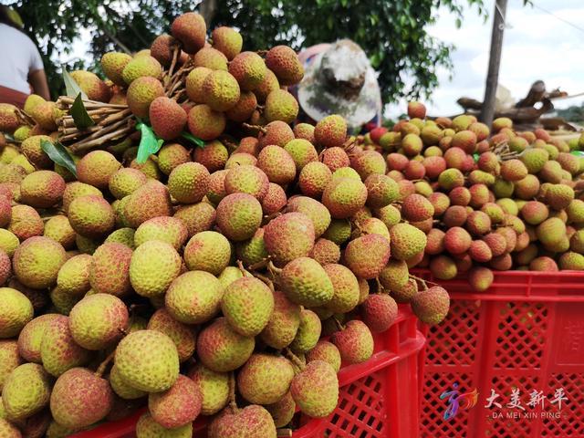 新平:荔枝产量翻番 价格低于往年