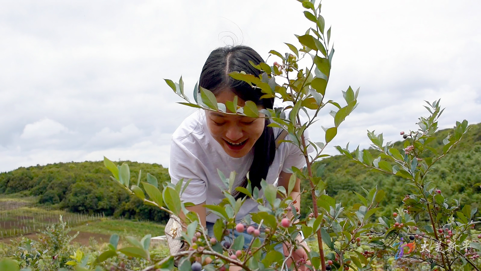 建兴:高山蓝莓试种成功 采摘游敲开致富门(李晓丽、刀雪锋) (7).jpg